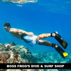 Boss Frog's Dive & Surf Shop